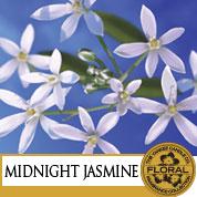 Midnight Jasmine