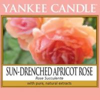Sun-Drenched Apricot Rose